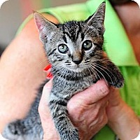Adopt A Pet :: Benji - Ft. Lauderdale, FL