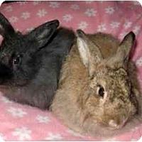 Adopt A Pet :: Karmyn - Santee, CA