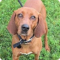 Adopt A Pet :: Bria - PENDING, in Maine - kennebunkport, ME