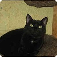 Adopt A Pet :: Karina Smirnoff - Lombard, IL