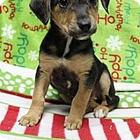 Adopt A Pet :: Blade - Wytheville, VA