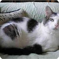 Adopt A Pet :: Buddy (mellow boy!) - Portland, OR