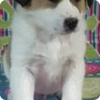 Adopt A Pet :: Penny - Hamburg, PA