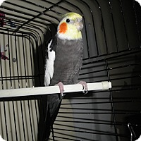 Adopt A Pet :: TC - Neenah, WI