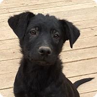Adopt A Pet :: Samurai - Evergreen, CO