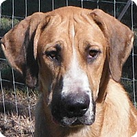 Adopt A Pet :: Rose - Pompton Lakes, NJ