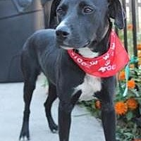 Adopt A Pet :: Lady Marmalade - Yukon, OK