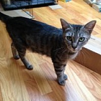 Adopt A Pet :: Oliver's Mom - Delmont, PA