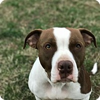 Adopt A Pet :: Daffodil - Christiana, TN