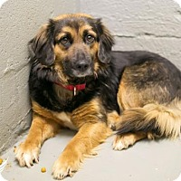 Adopt A Pet :: Jorah - Roanoke, VA