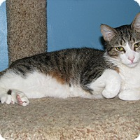 Adopt A Pet :: Julio - New Kensington, PA
