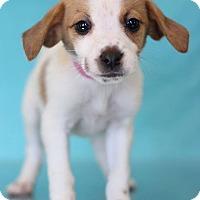 Adopt A Pet :: Nala - Waldorf, MD