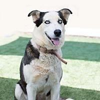 Adopt A Pet :: Chloe - Manchester, NH
