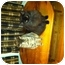 Photo 1 - Domestic Longhair Cat for adoption in Clay, New York - CLEO