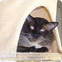 Adopt A Pet :: Ashoka (The Great) - Beverly Hills, CA