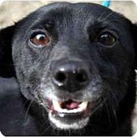 Adopt A Pet :: Peter aka Pickles - Canoga Park, CA