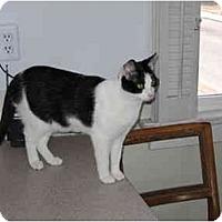 Adopt A Pet :: Sassy2 - North Boston, NY