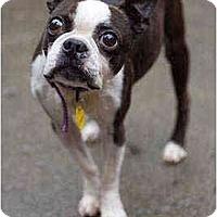 Adopt A Pet :: Gramps - Portland, OR