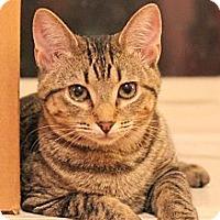 Adopt A Pet :: Wendy (& Wyatt) - Arlington, VA