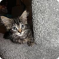 Adopt A Pet :: Rambo - Barnegat, NJ