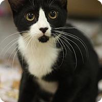 Adopt A Pet :: April - Sacramento, CA