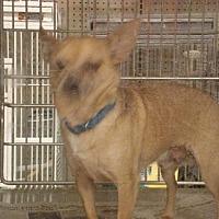 Adopt A Pet :: tinker - Tonopah, AZ