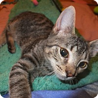 Adopt A Pet :: Dean Winchester - Norwich, NY