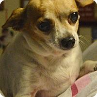 Adopt A Pet :: Precious - Prole, IA