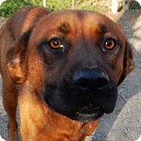 Adopt A Pet :: *River - PENDING - Westport, CT