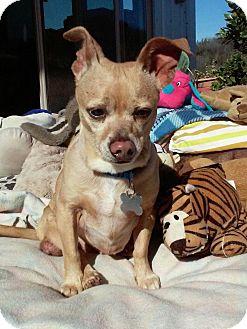 Corgi/Kishu Mix Dog for adoption in Creston, California - Dinky