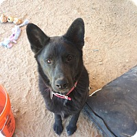 Adopt A Pet :: Ruckus - Phoenix, AZ
