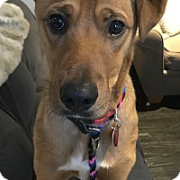 Adopt A Pet :: Buck 1 in CT - Manchester, CT