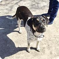 Adopt A Pet :: Bella (PAWS) - Von Ormy, TX