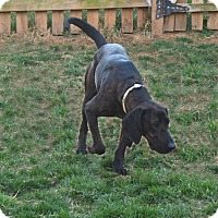 Adopt A Pet :: Julep - Ijamsville, MD