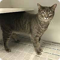 Adopt A Pet :: Diamond - Newport, NC