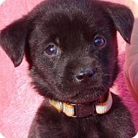 Adopt A Pet :: Ben - Enfield, CT