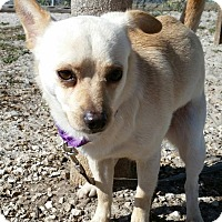 Adopt A Pet :: Biscuit - Fort Myers, FL