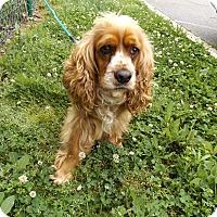 Adopt A Pet :: Bailey -Adopted! - Kannapolis, NC