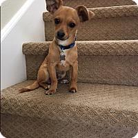 Adopt A Pet :: Riley - Pleasanton, CA