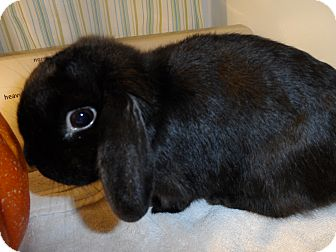 Lop-Eared Mix for adoption in Hillside, New Jersey - Maxie