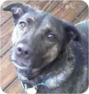 Greyhound/Fox Terrier (Smooth) Mix Dog for adoption in Forest Hills, New York - Jackie