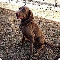 Adopt A Pet :: Phoebe - Fort Riley, KS