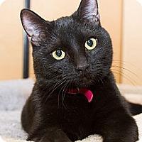 Adopt A Pet :: Liam - Irvine, CA