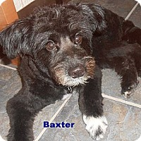 Adopt A Pet :: Baxter - Arenas Valley, NM