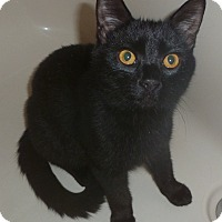 Adopt A Pet :: Cooper 2 - Plainville, MA