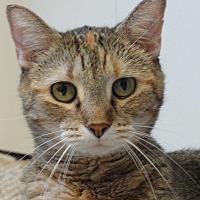 Adopt A Pet :: ZuZu - Colfax, IA