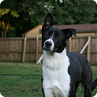 Adopt A Pet :: Petunia - Virginia Beach, VA