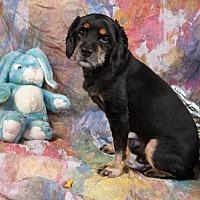 Adopt A Pet :: Musie - Elizabethtown, PA