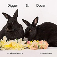 Adopt A Pet :: Digger and Dozer - Jurupa Valley, CA