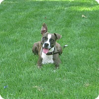 Adopt A Pet :: Shyloh - Gainesboro, TN
